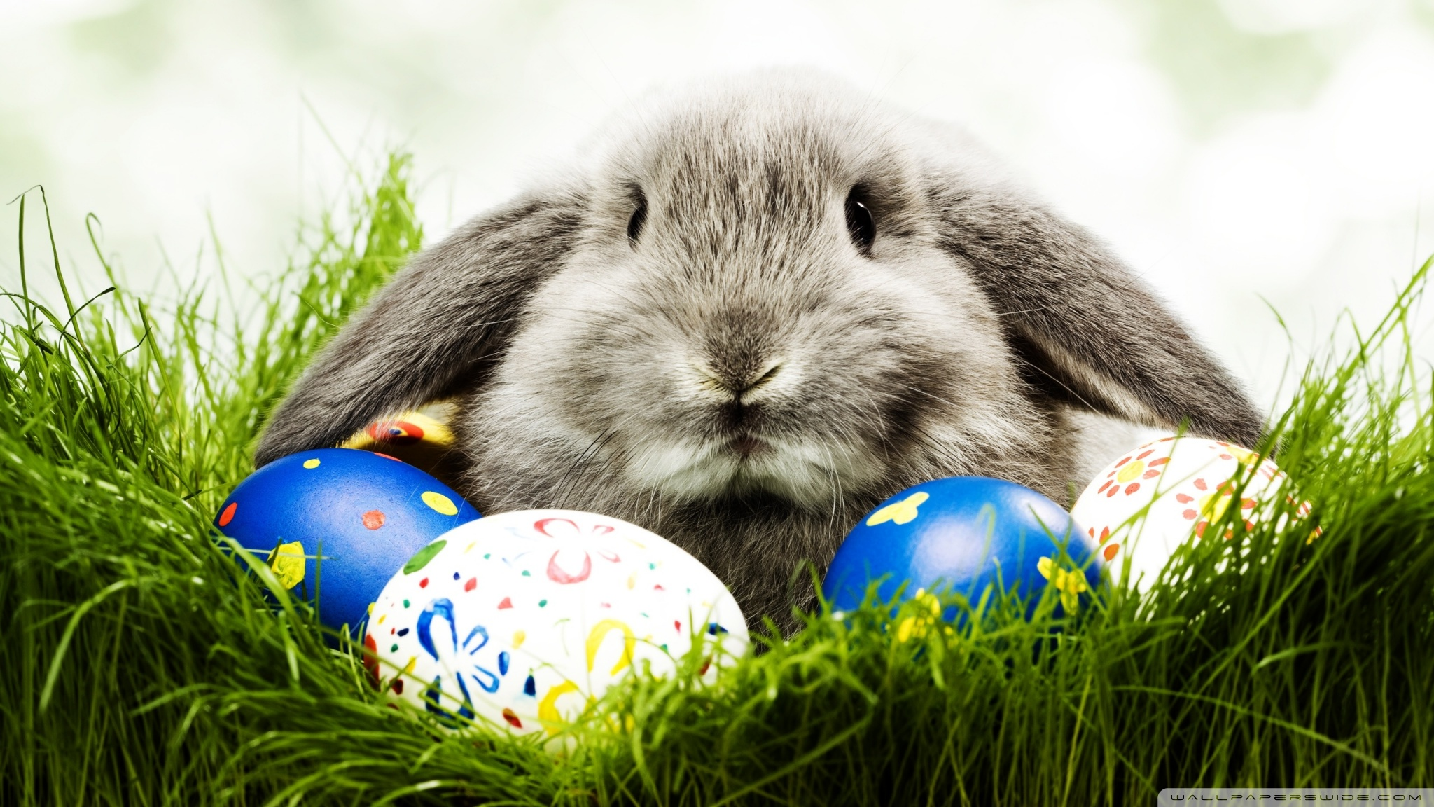 Easter Bunny 50329