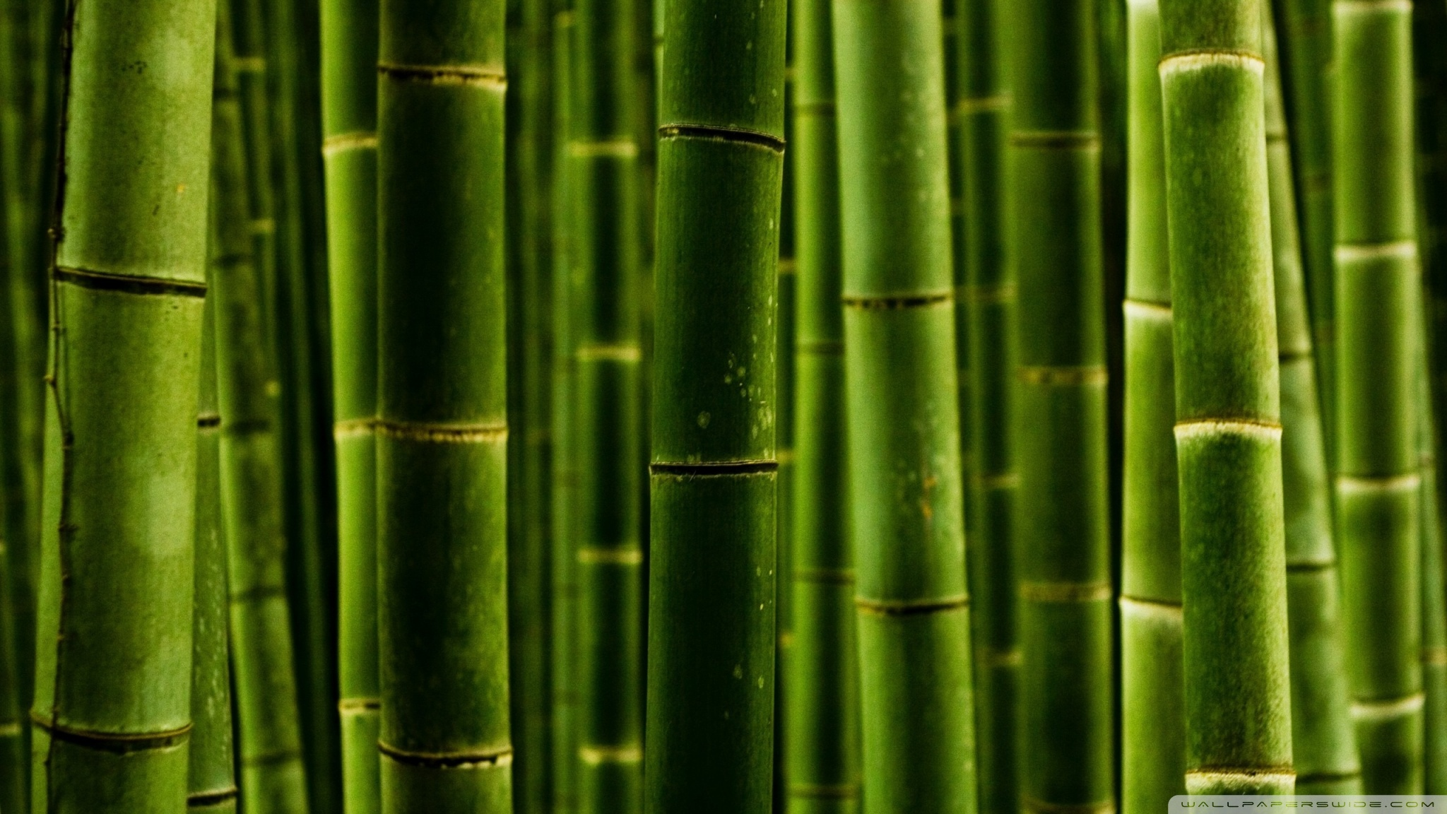 Bamboo 50362 Others