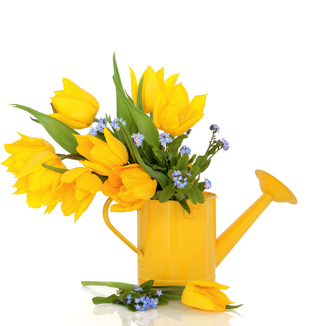 Yellow tulips 50476