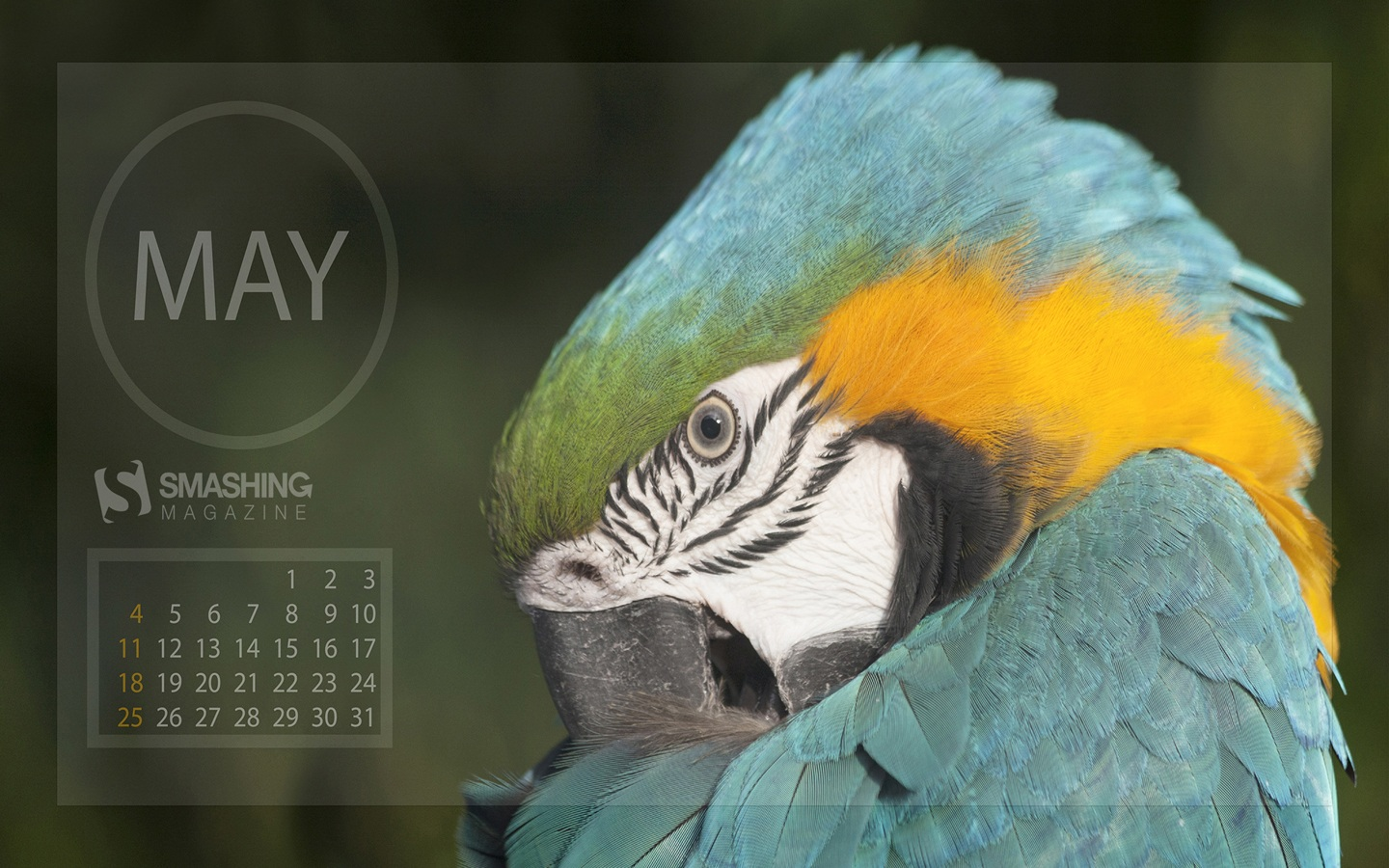 In January Calendar Wallpaper 50578