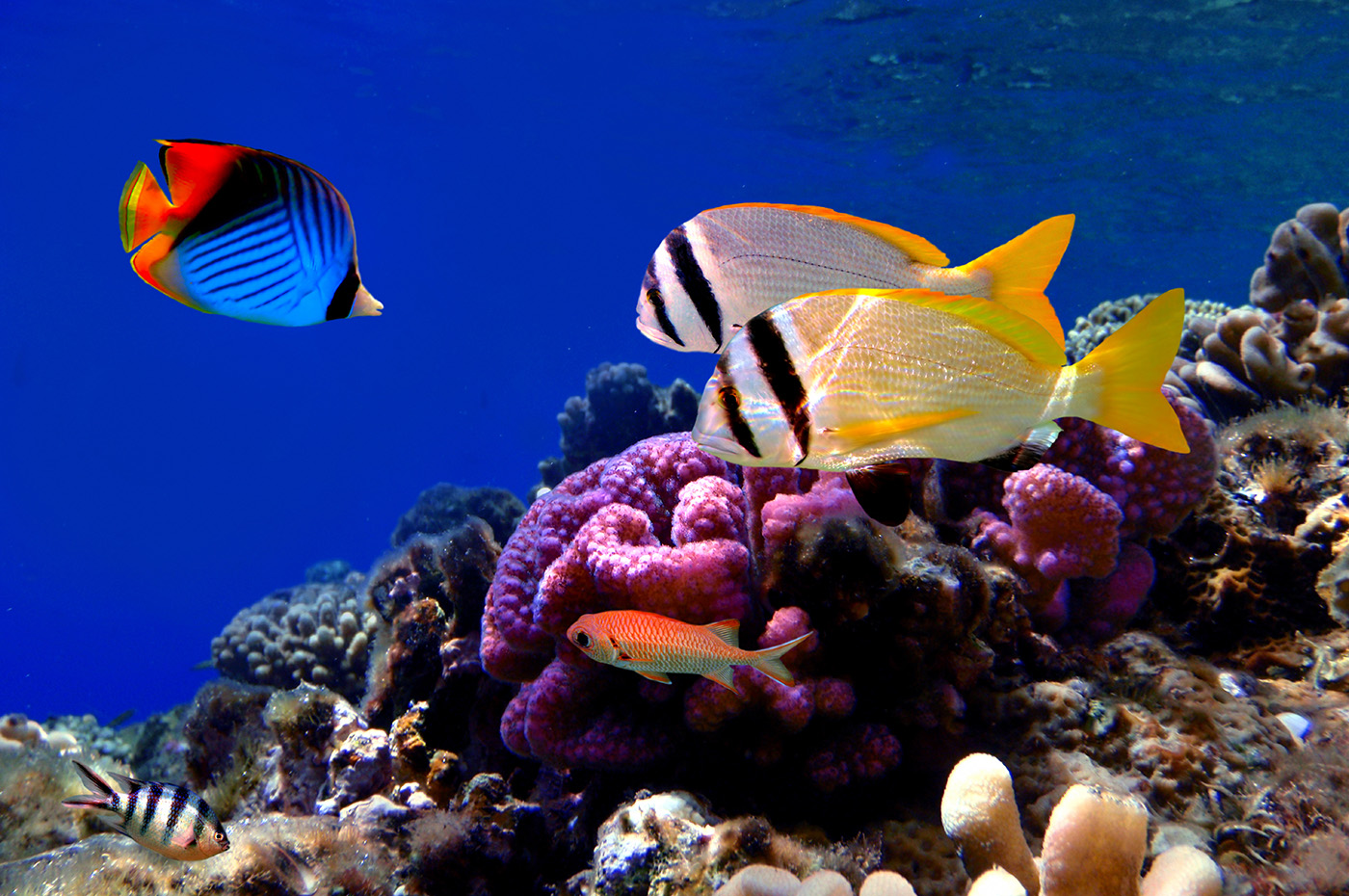 Coral and fish swimming in the sea floor 50766