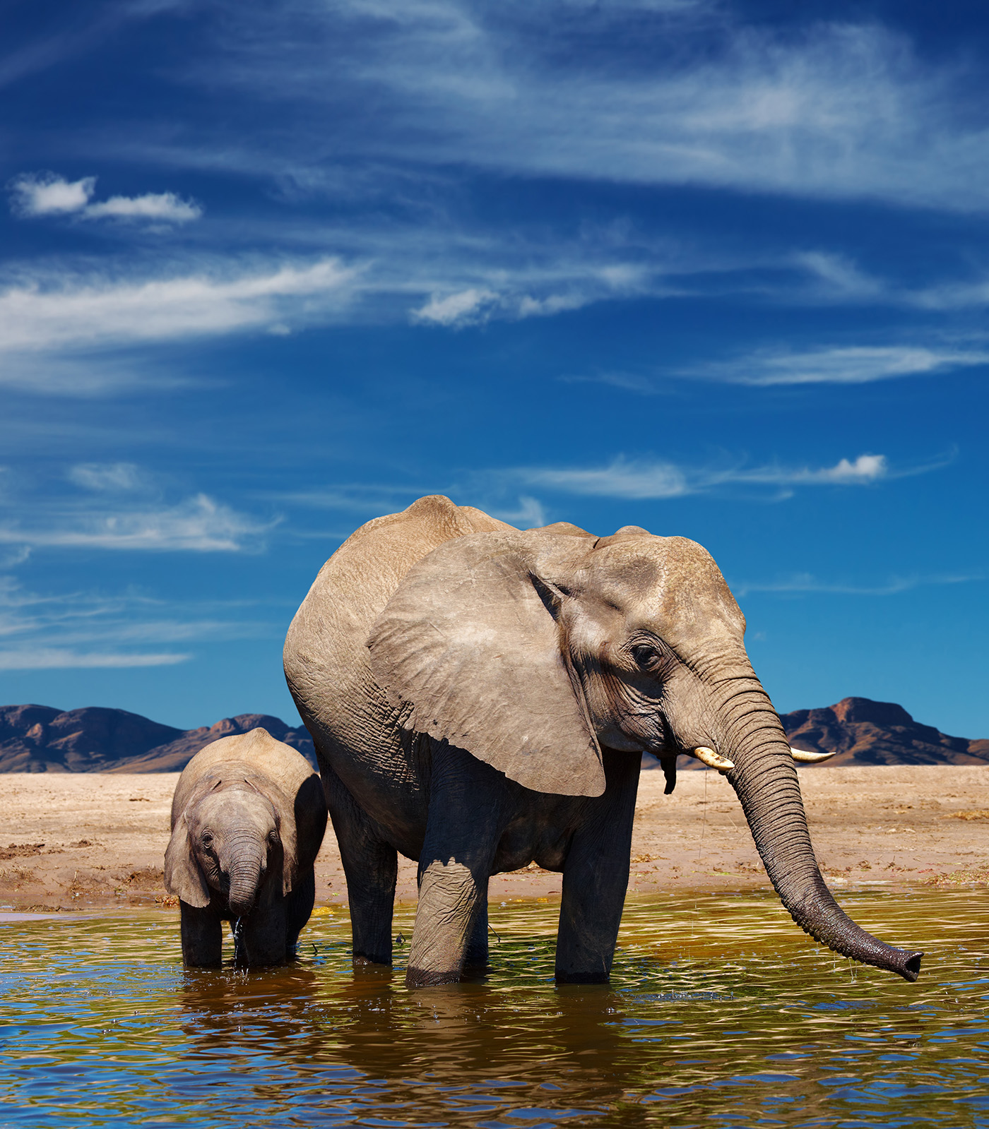 The elephant in the river water baby elephant 50836