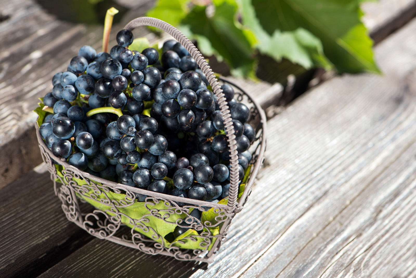Placed in the basket of grapes 50862