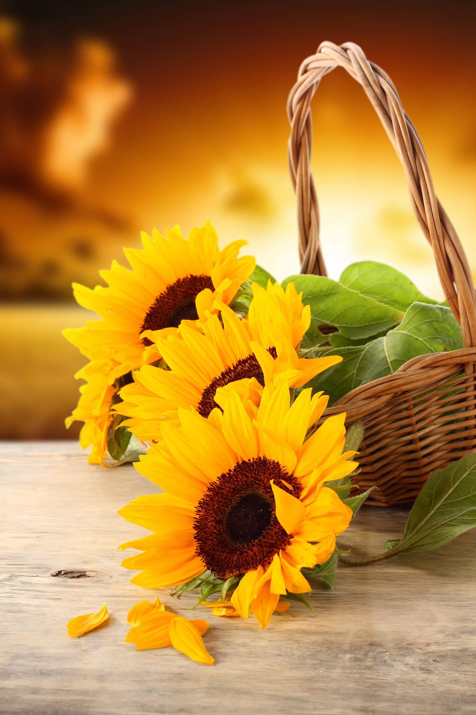 Basket with sunflowers 50977