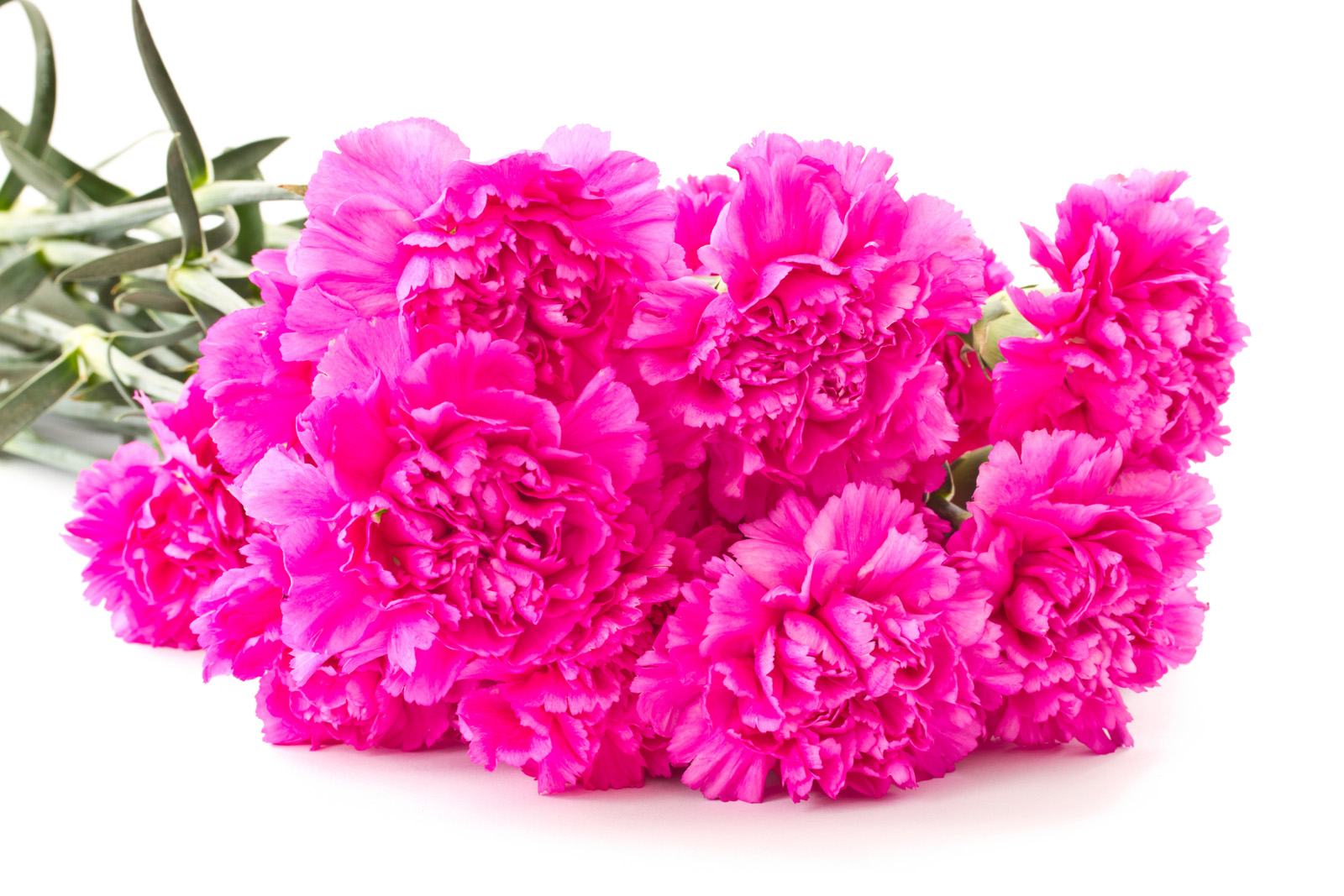 Carnations 50994