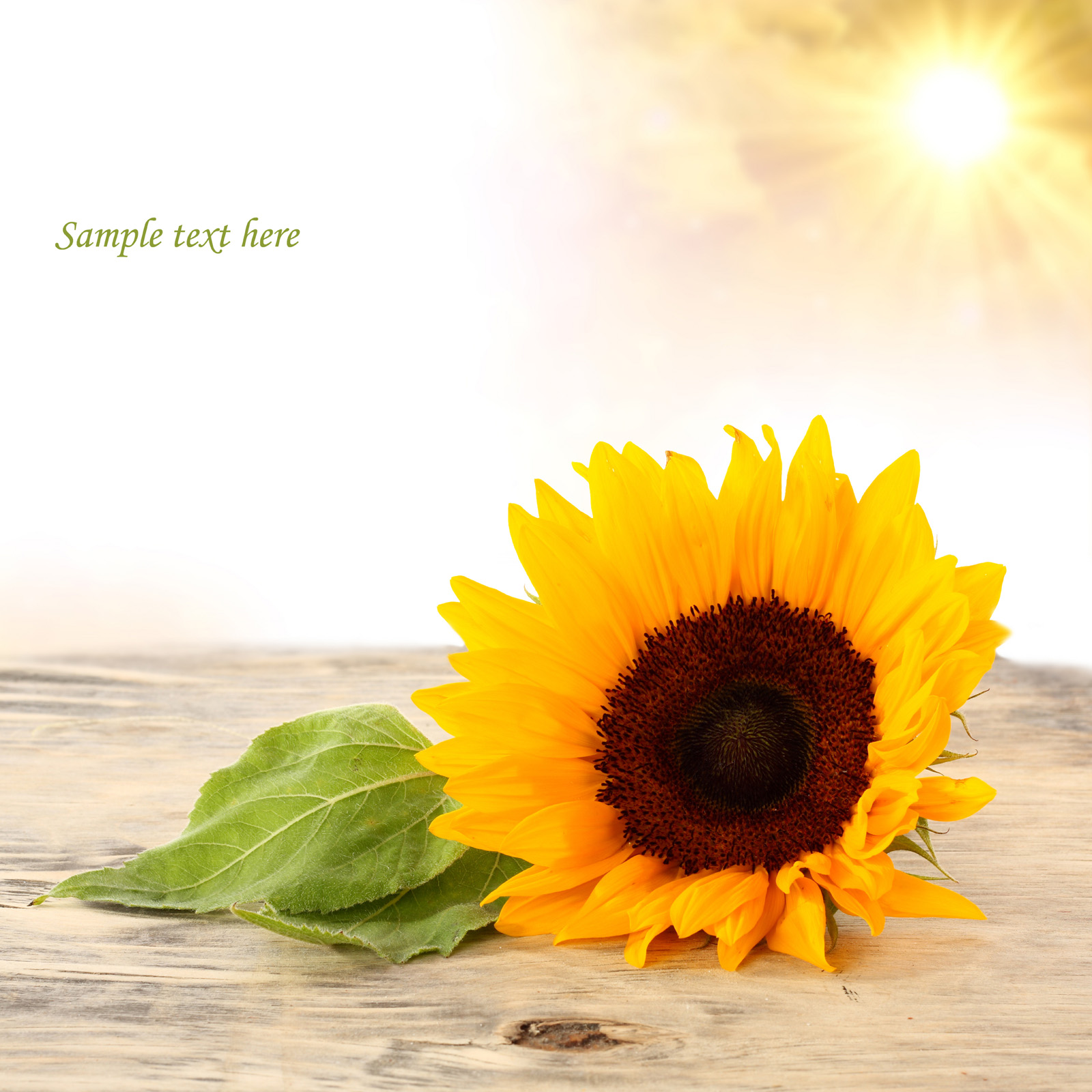 Bright sunshine and sunflowers 50996