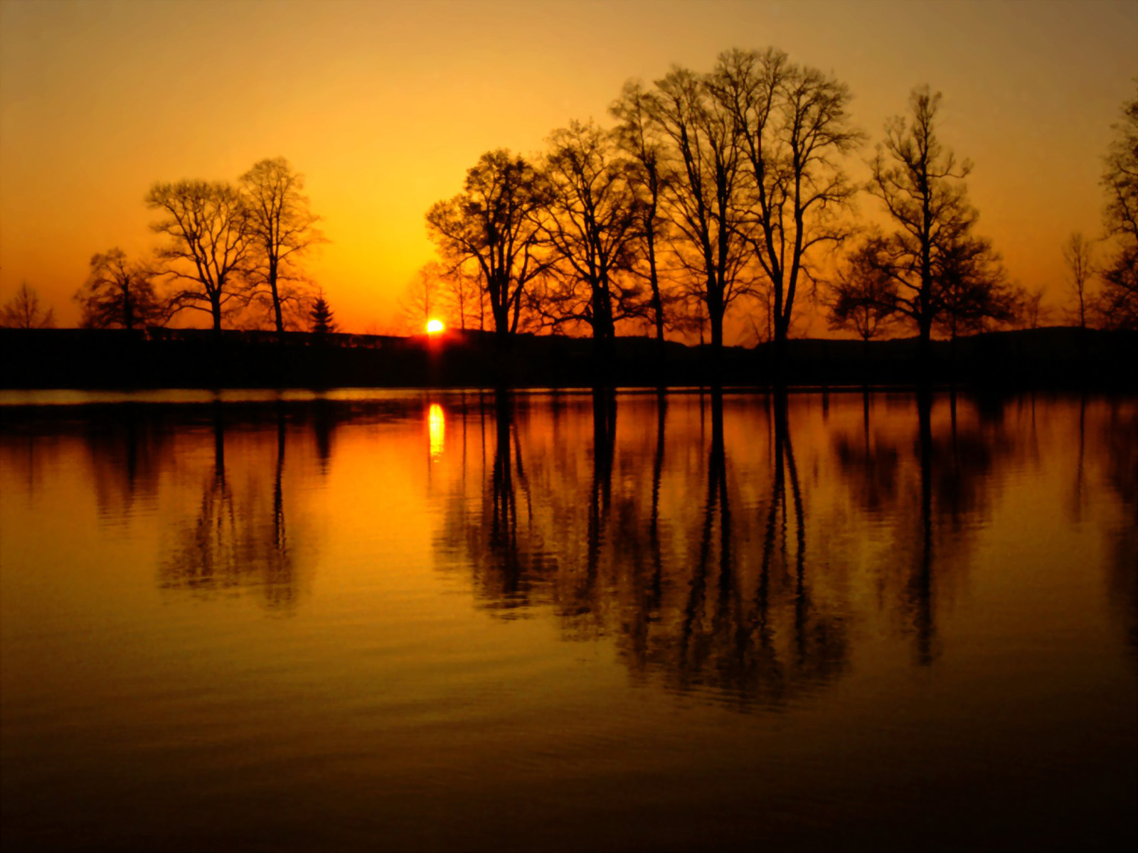 Sunset lake reflection of trees 51111