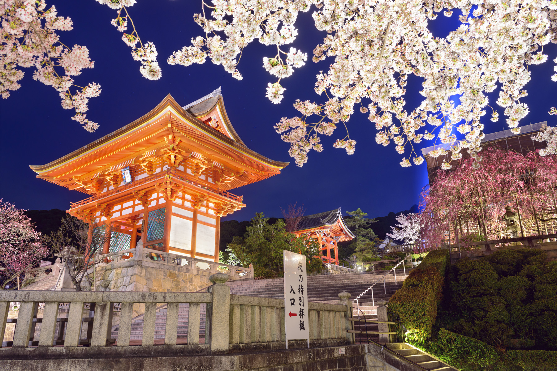 Cherry blossoms and monuments 51220