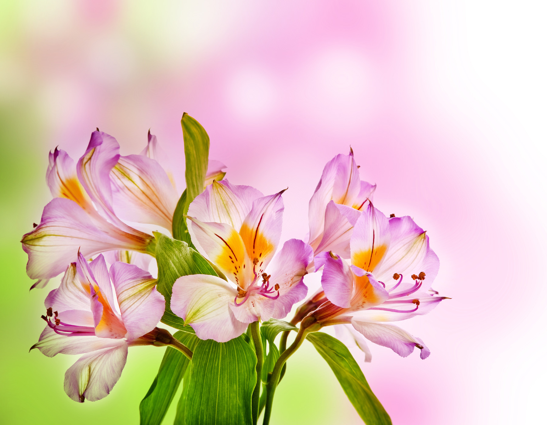Flower wallpaper 51683