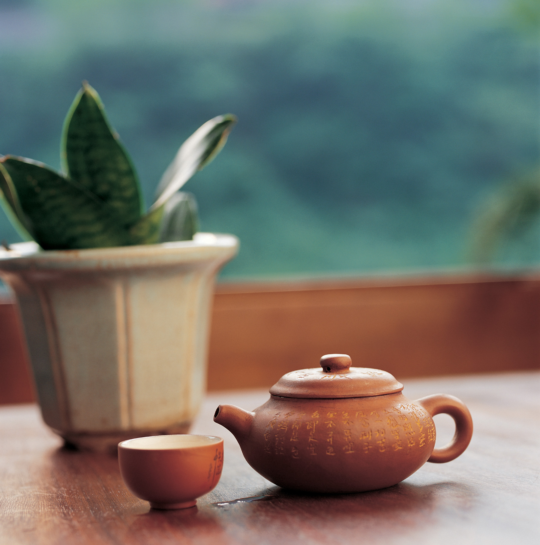 Pot plants with teapot micro 51690