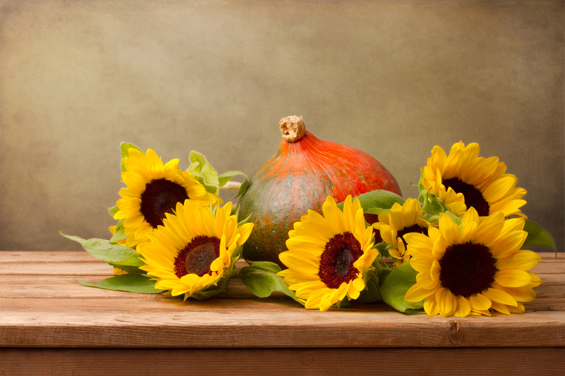 Table of sunflowers and squash 51805
