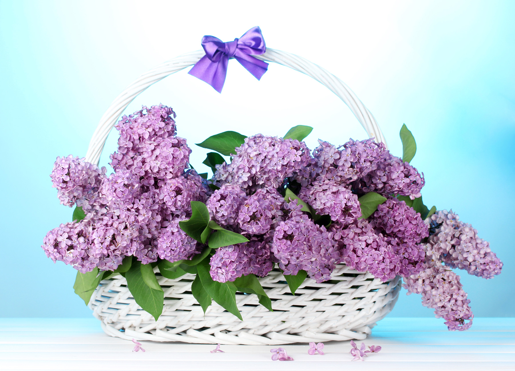 Flower basket lilac flowers in 51825