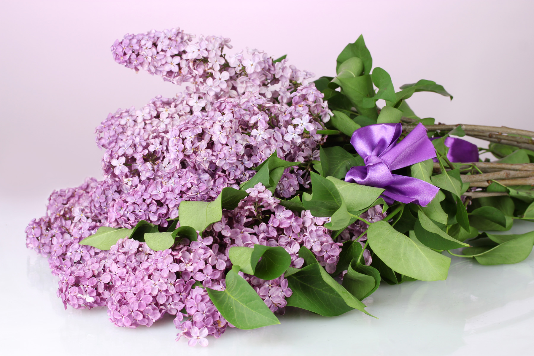 Purple Butterfly LILACS 51839