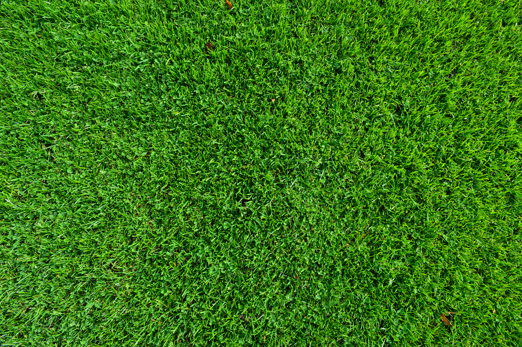 Top view perspective of green grass 51970