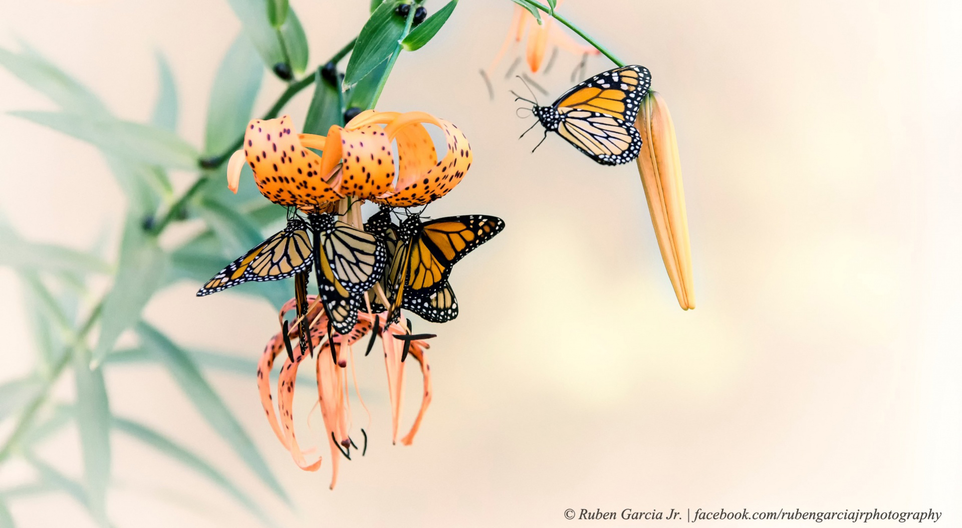 Flowers and butterflies 52106