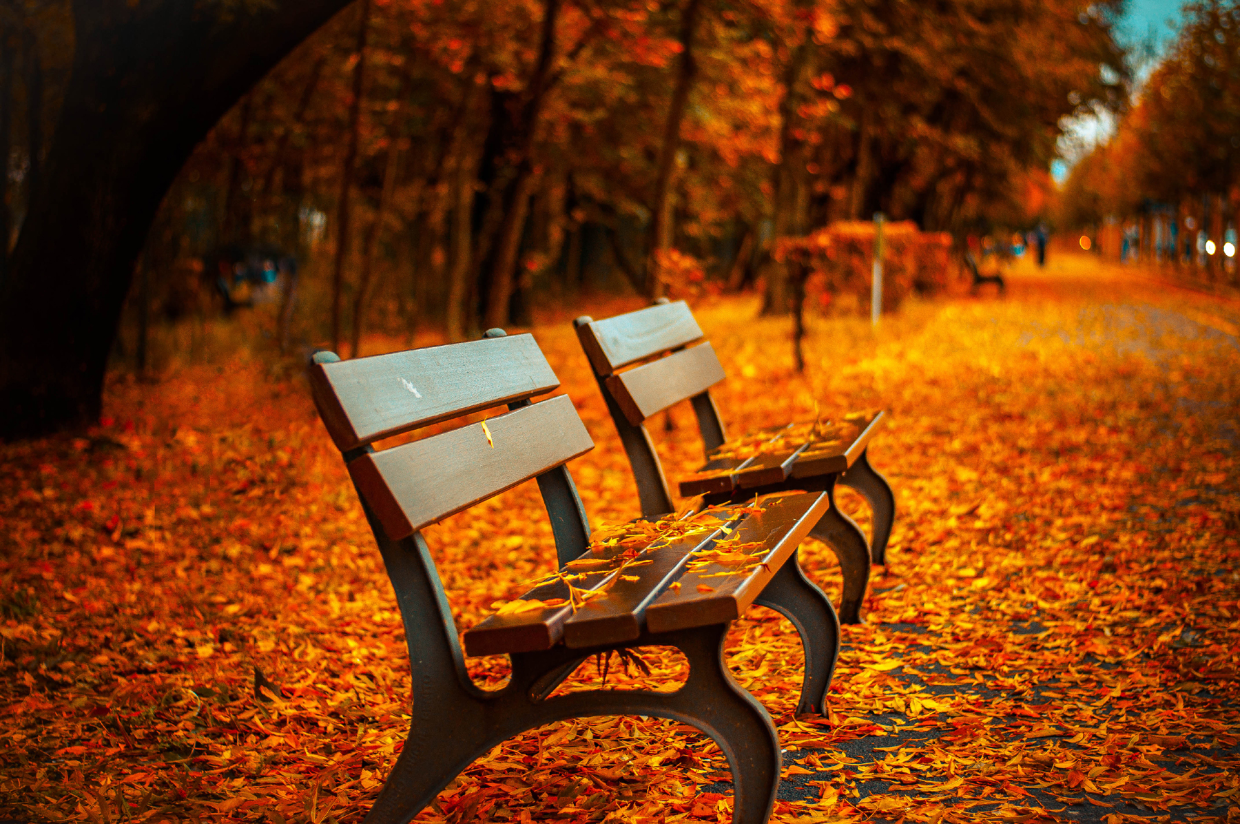 Park bench and floor in the fall leaves 52160