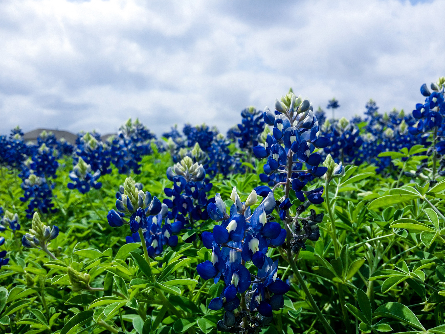 Deep blue flowers and plants 52185