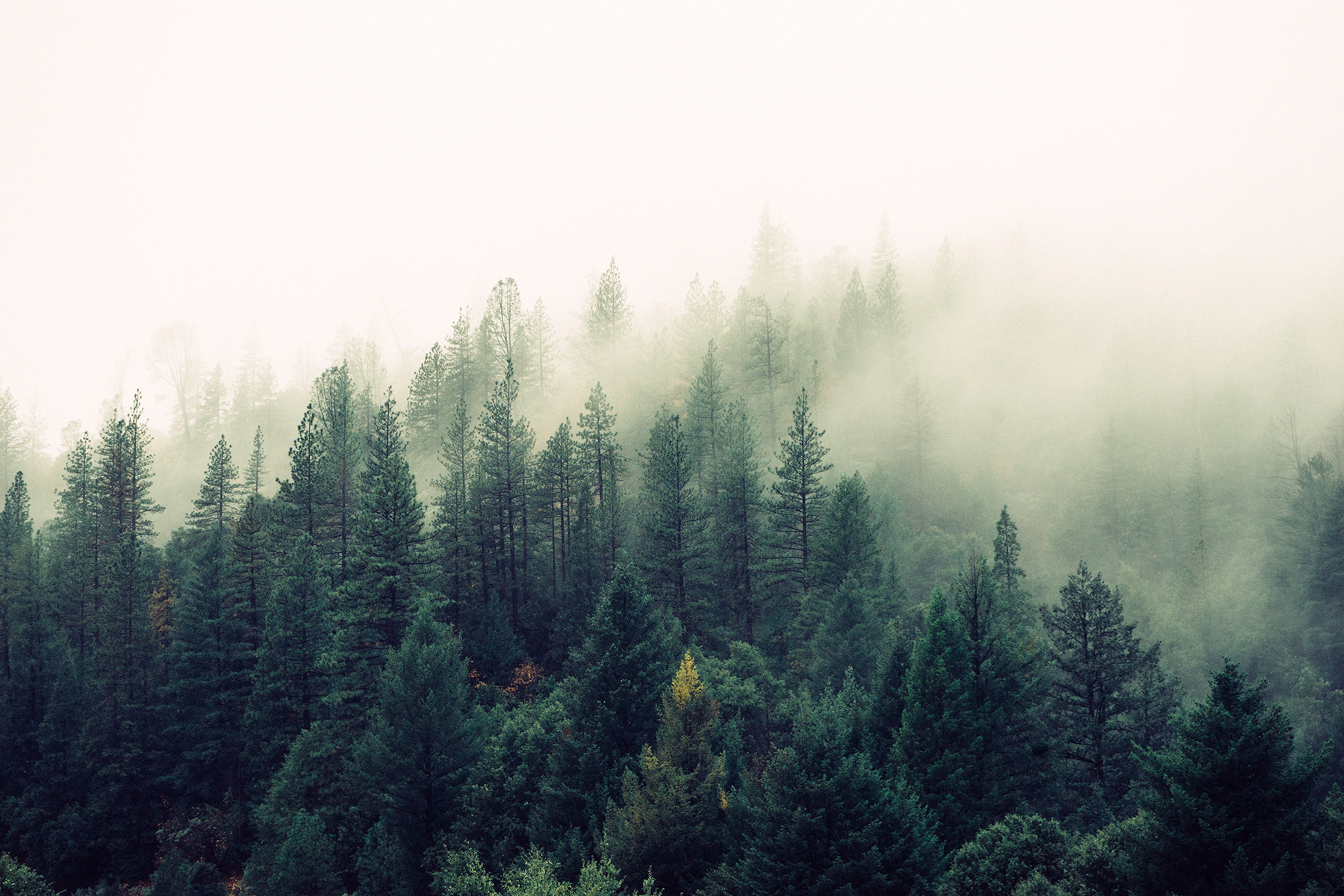 Fog in the green forest 52208