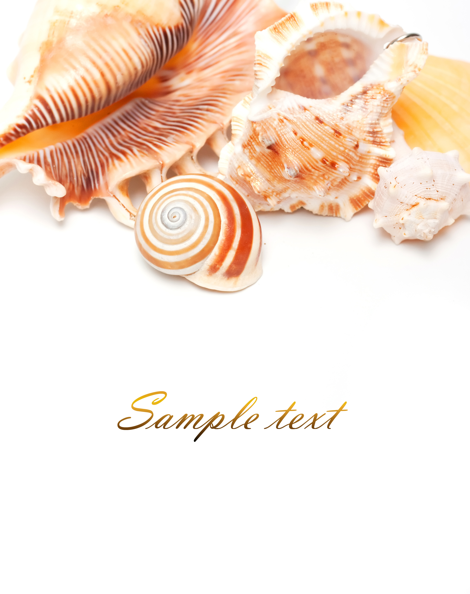 Shape the different shells conch 52299