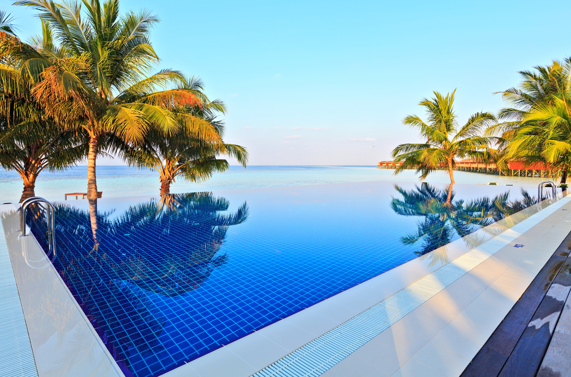 Coconut trees and crystal clear swimming pool 52317