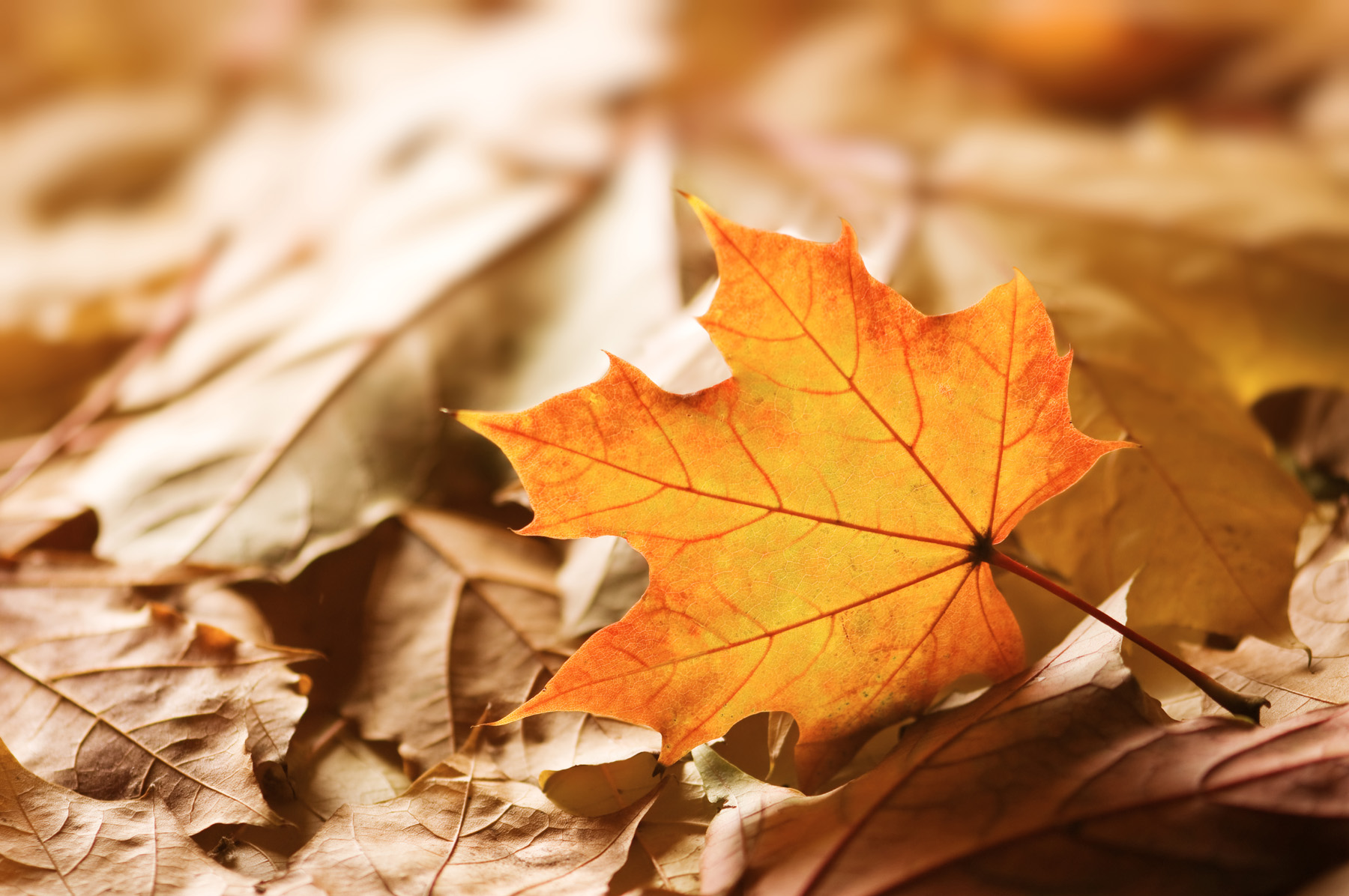 Autumn leaves on the ground features 52358
