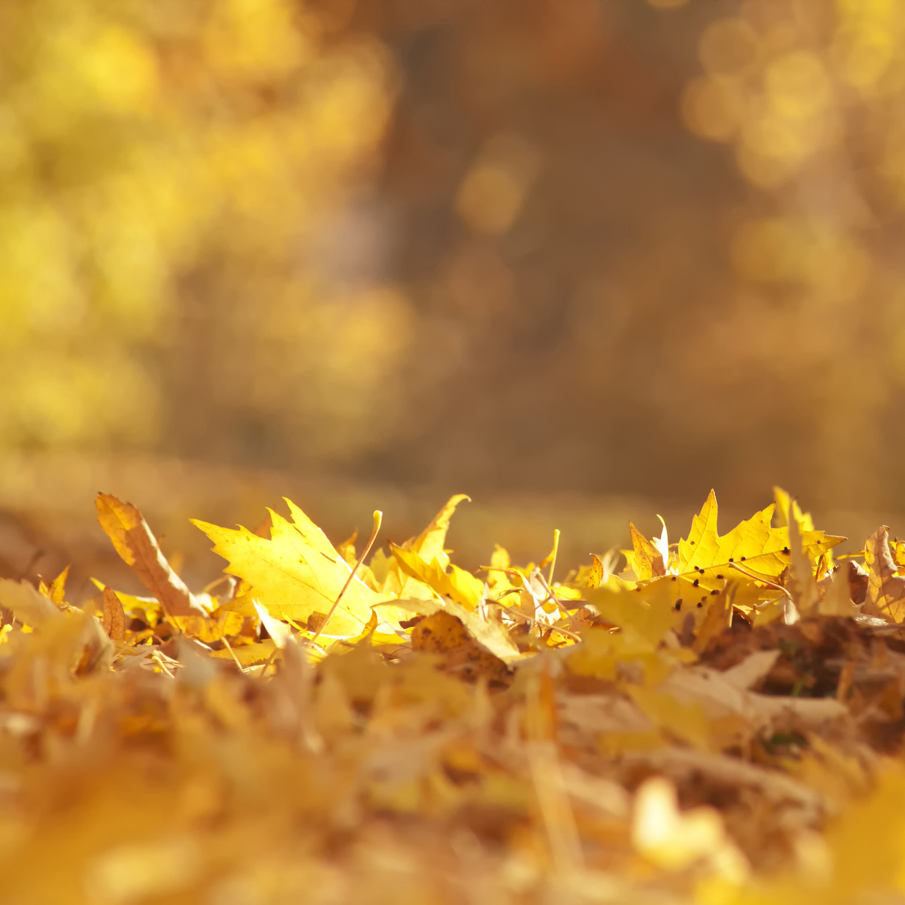 Fall of leaves 52375