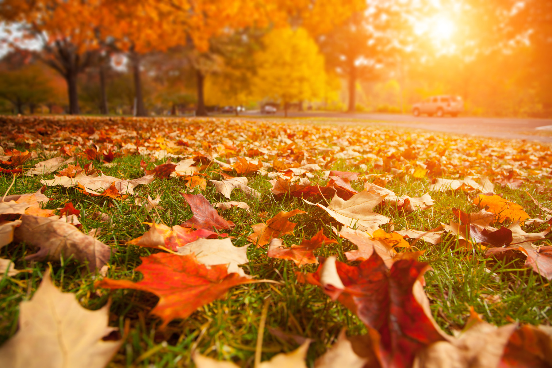 On the grass in the fall leaves 52389