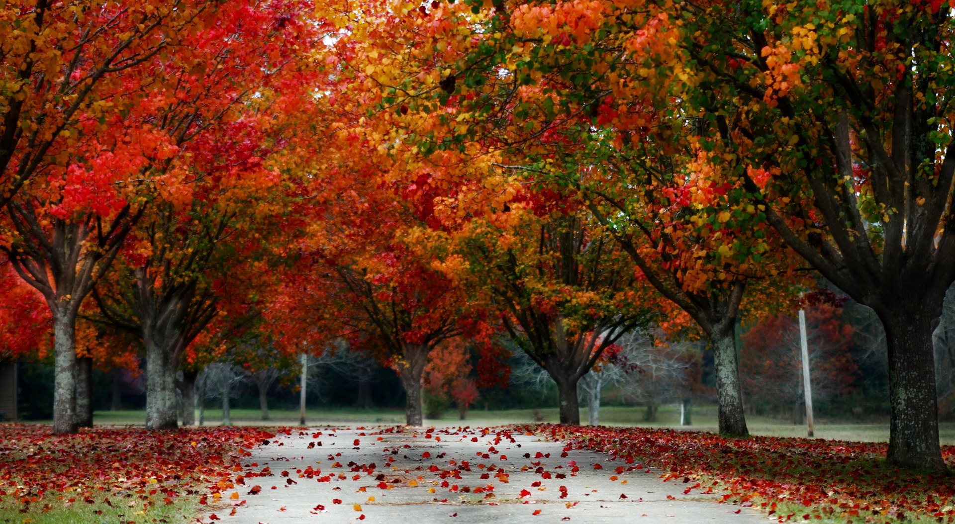 autumn landscape related keywords suggestions autumn landscape