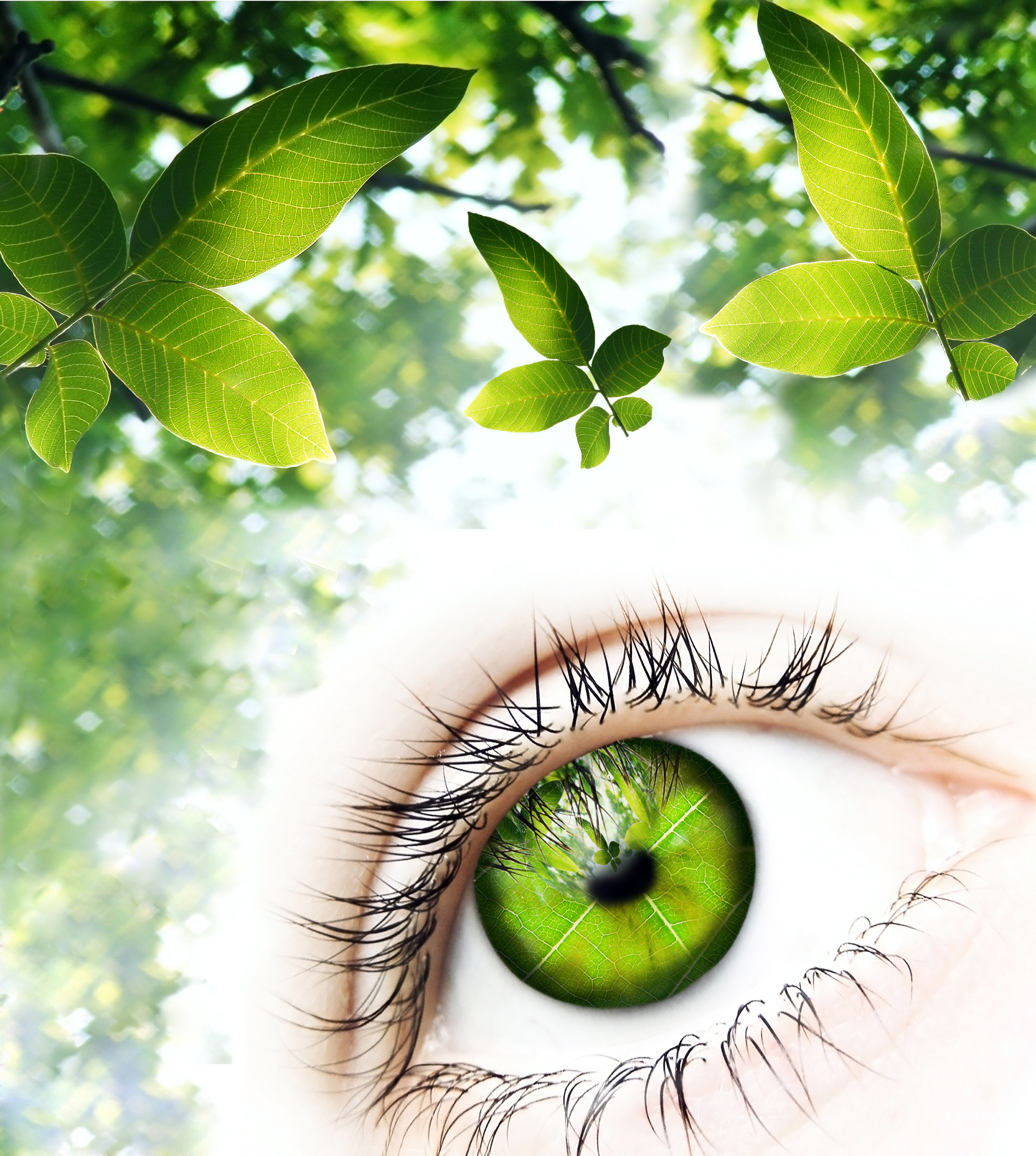 Eyes with green leaves on the tree creative 52709