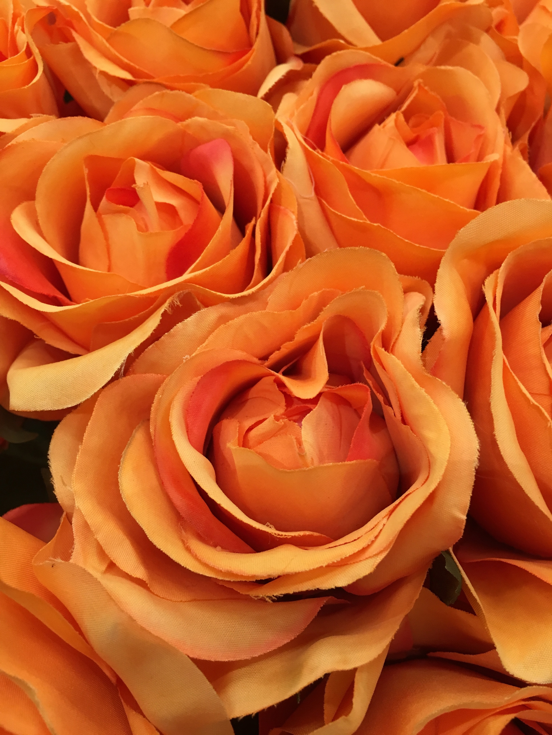 Orange roses with close-range photogrammetry 52714