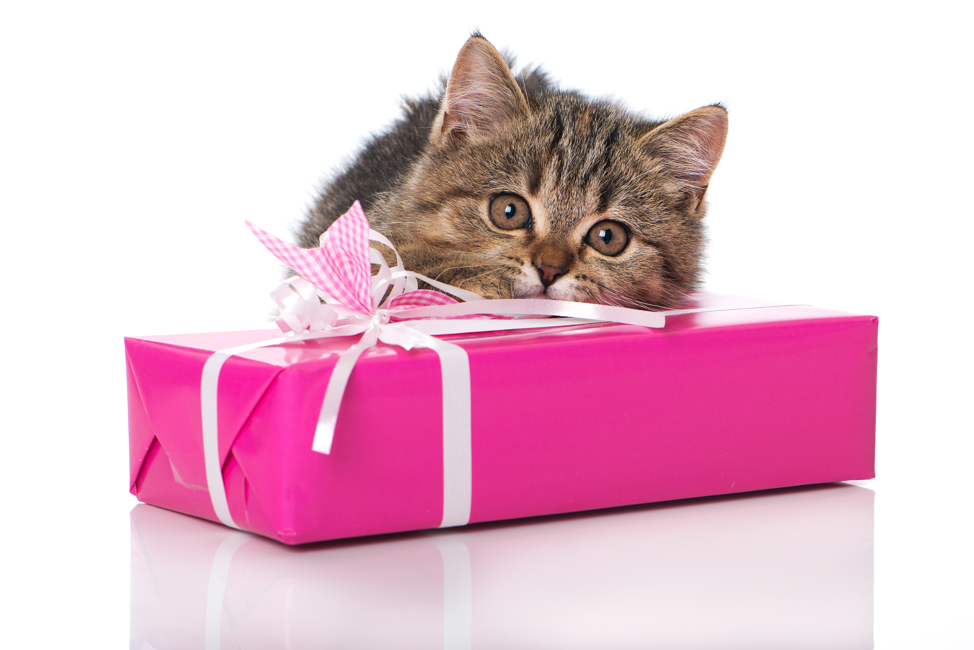 Lying on the gift box of kittens 52750