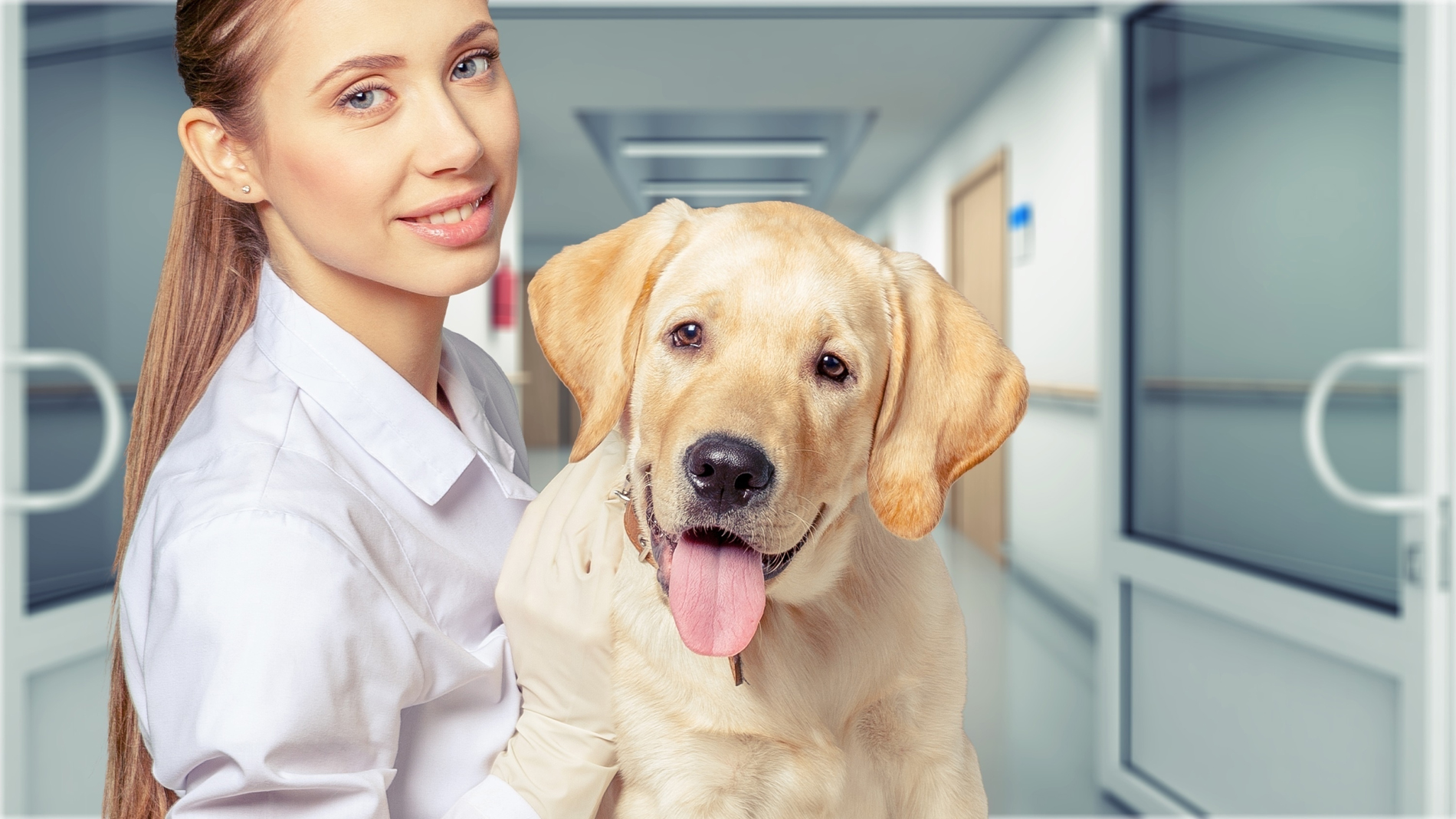 Hands holding the dog's veterinarian beauty 52753