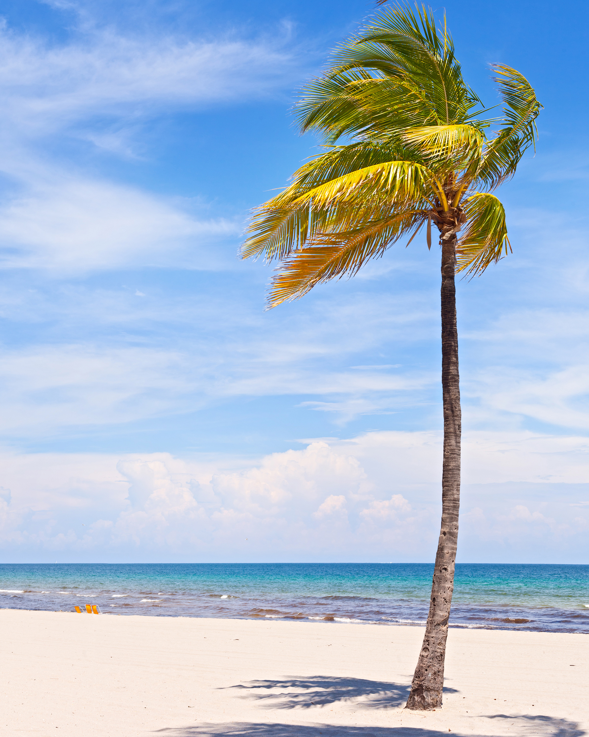 Beach coconut trees swaying in the wind 52775