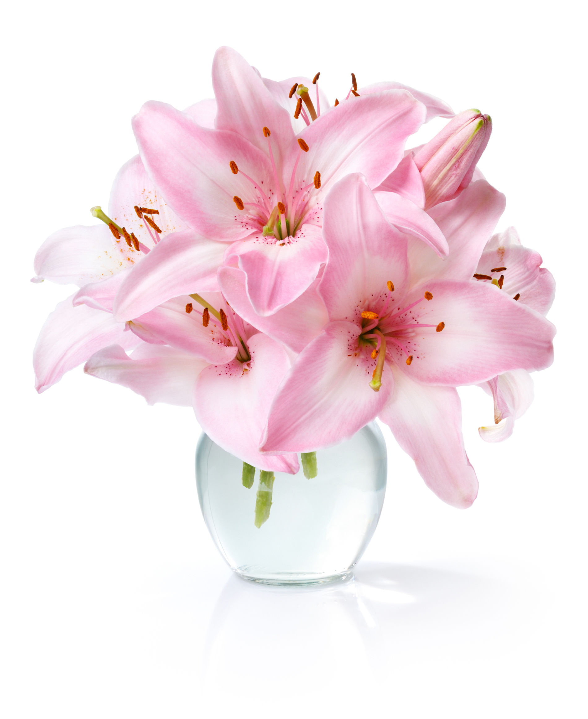 In a vase of pink lilies 52838