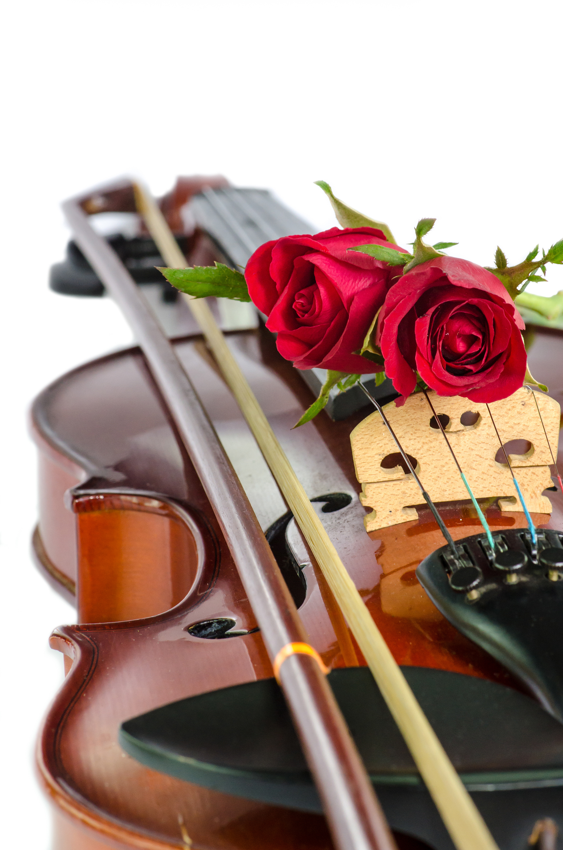 Placed In The Rose On The Violin 52915 Flower Wallpapers Flowers