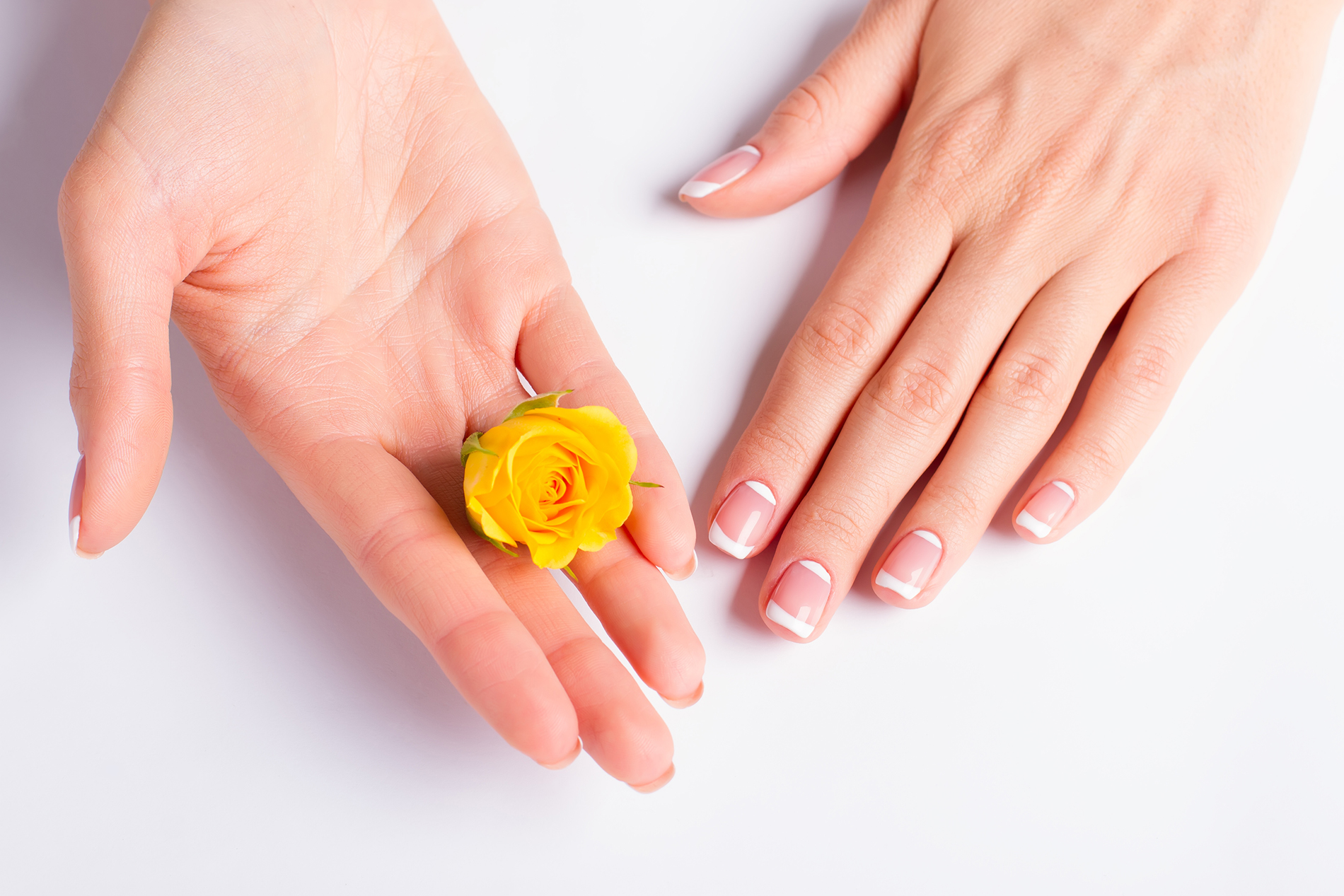 On the Palm of the yellow rose flower 52974