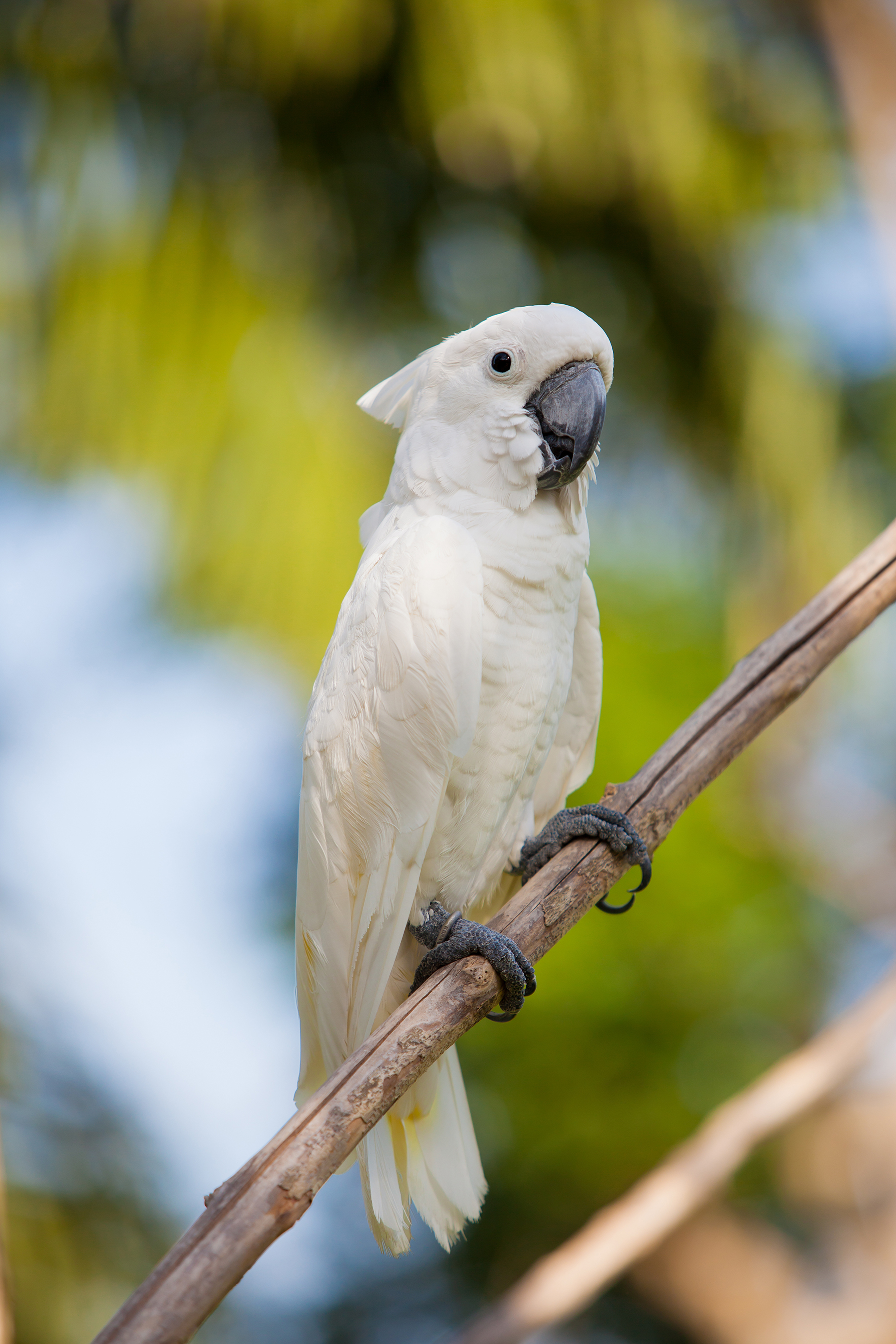 Branches of white parrots 52979