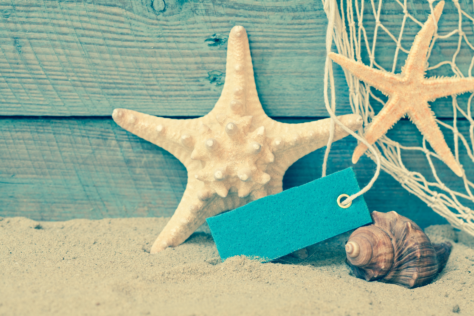 Shell starfish and paper tags 53339