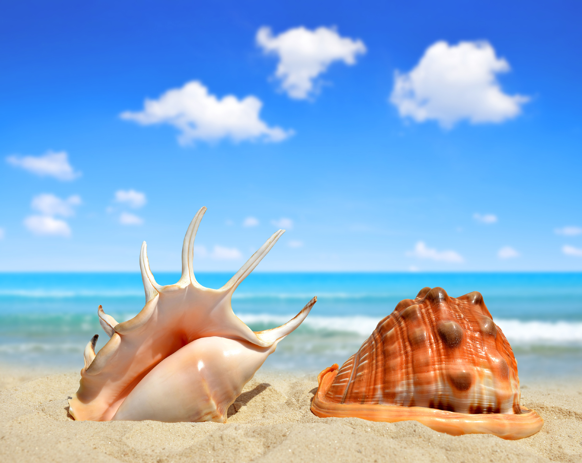 Blue sky and white clouds and the shells on the beach 53348