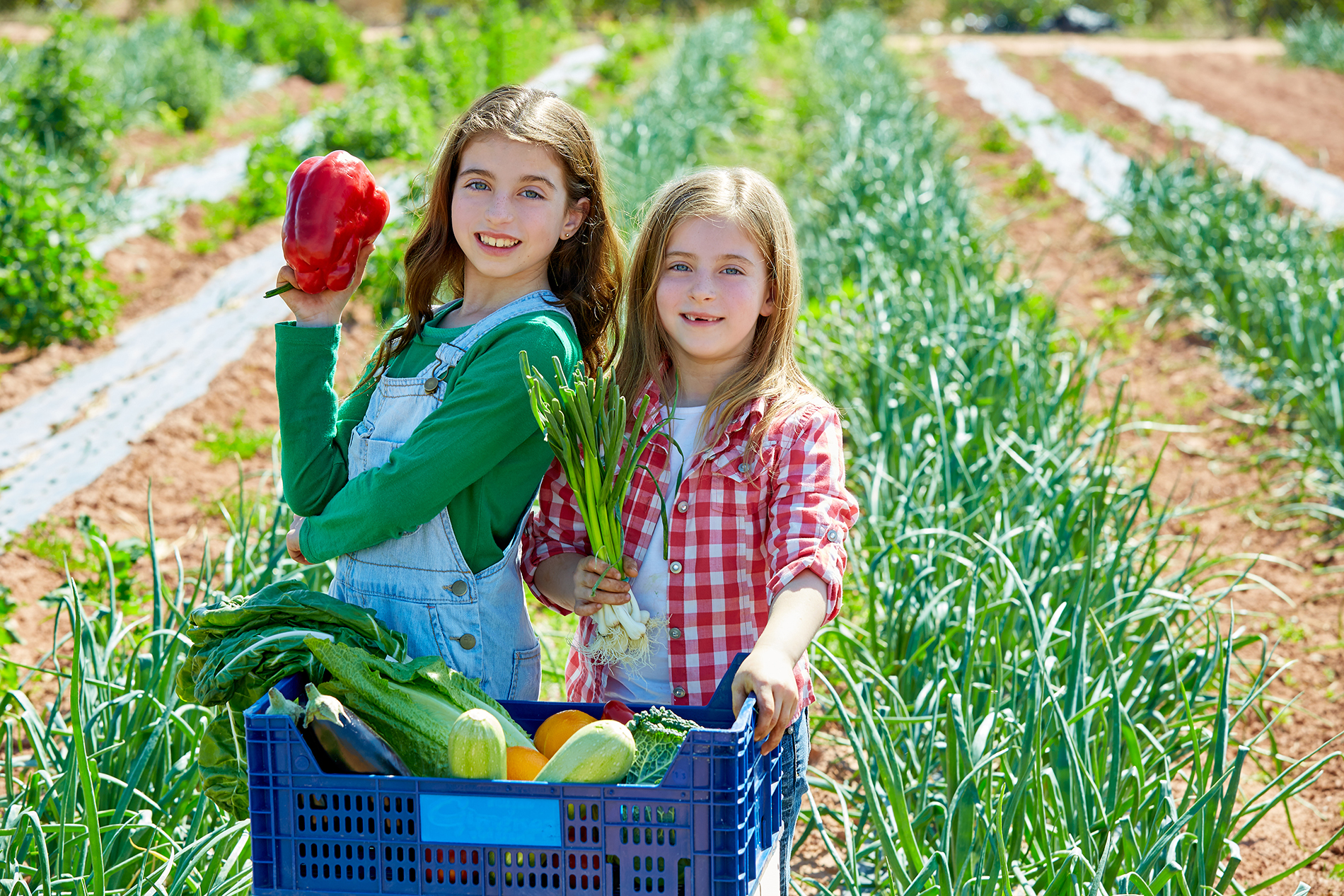 Both girls carrying vegetables 53483