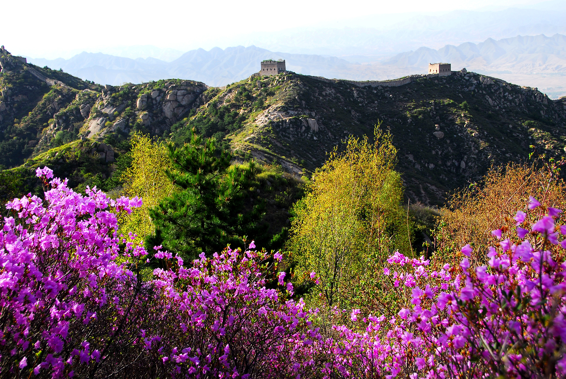 Laiyuan batholith, the great wall and the beautiful flower 53539