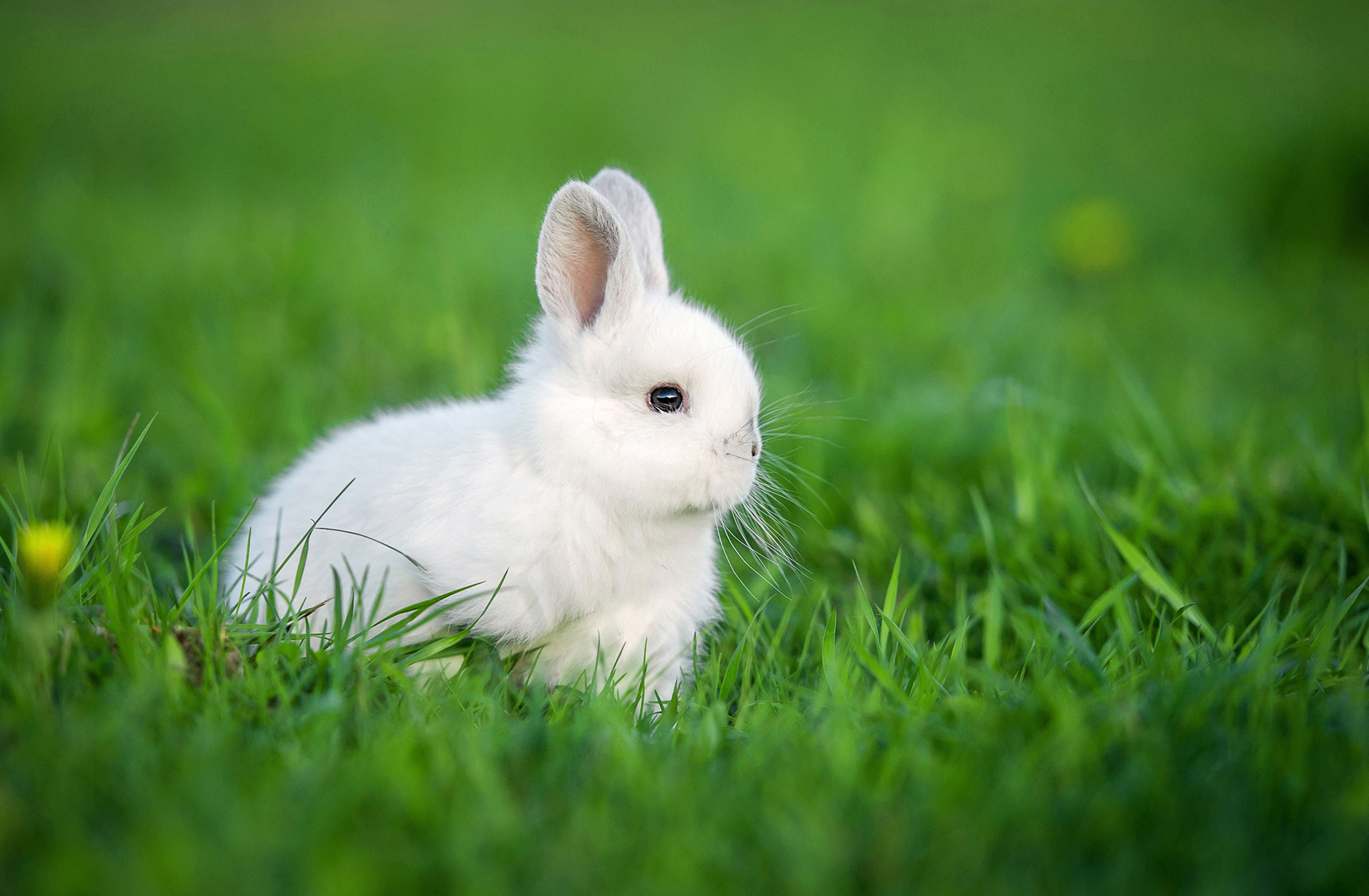 Green grass rabbit 53653