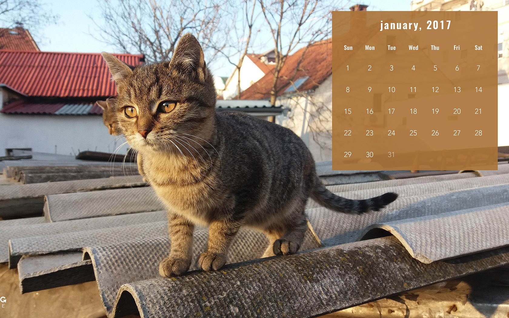 Month year calendar wallpapers 53809