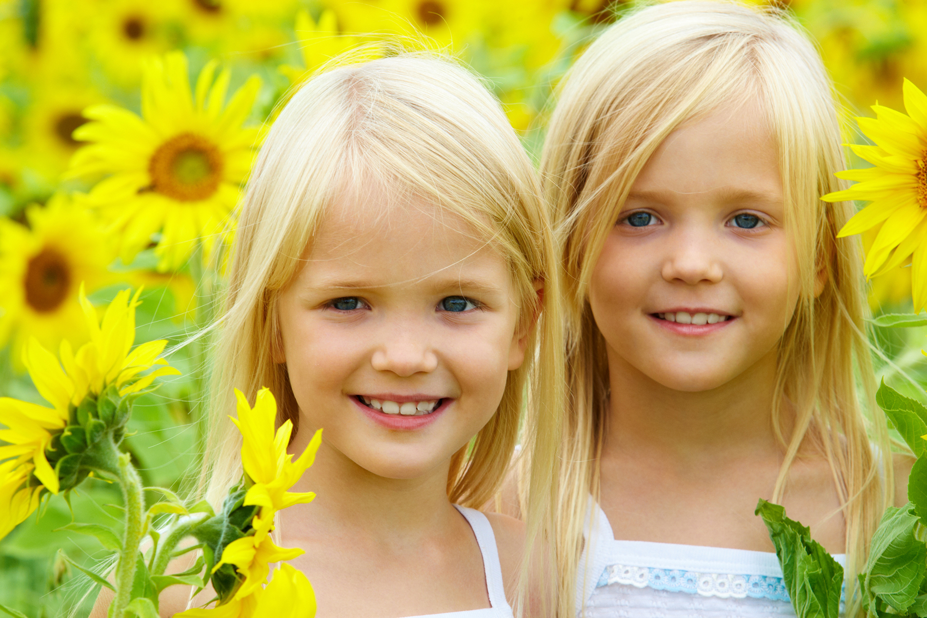 Sisters in the sunflower flower  53944