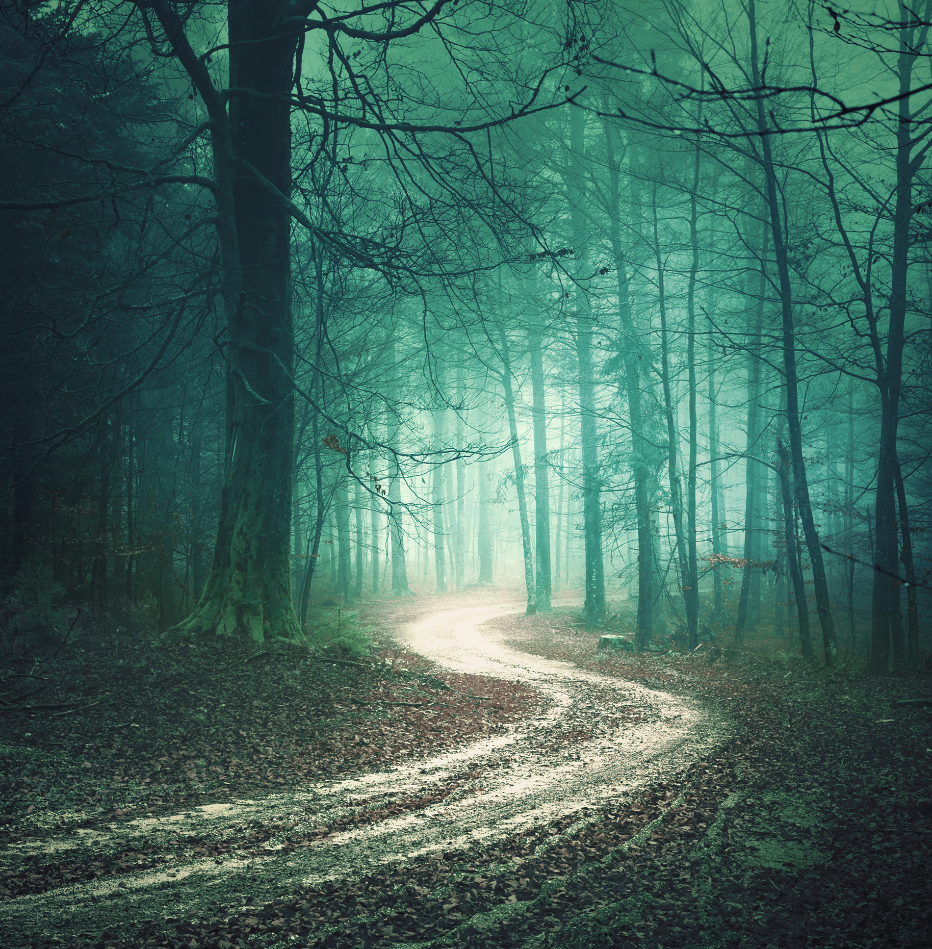 Path and woods scenery  53969