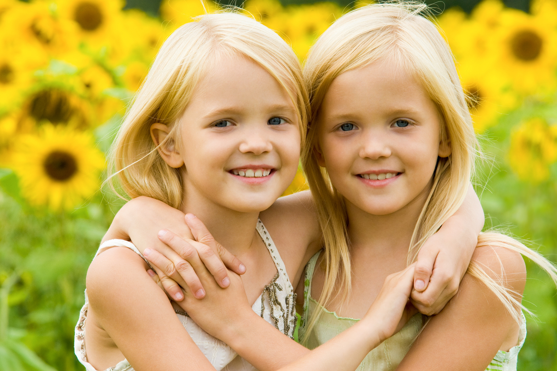 Sisters in the sunflower flower  53979