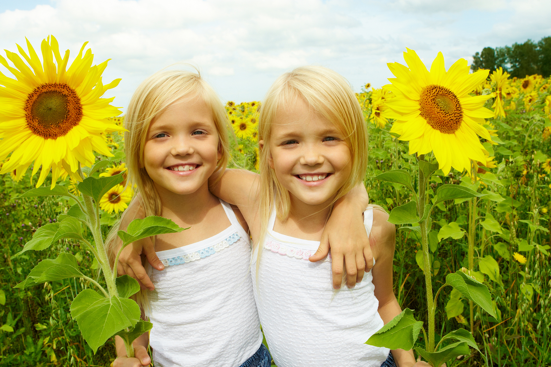Sisters in the sunflower flower  54010