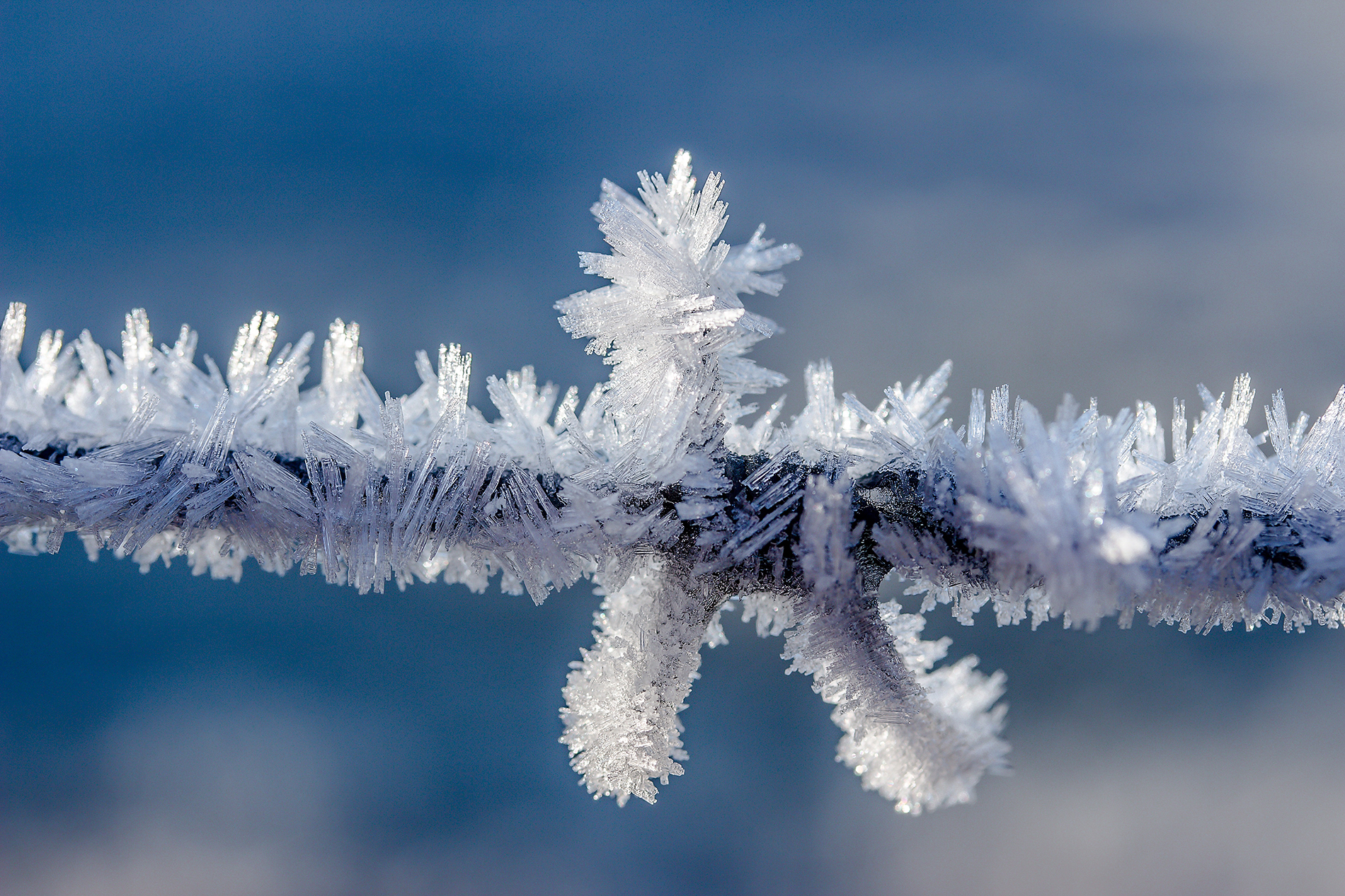 Ice crystals formed on branches 54119