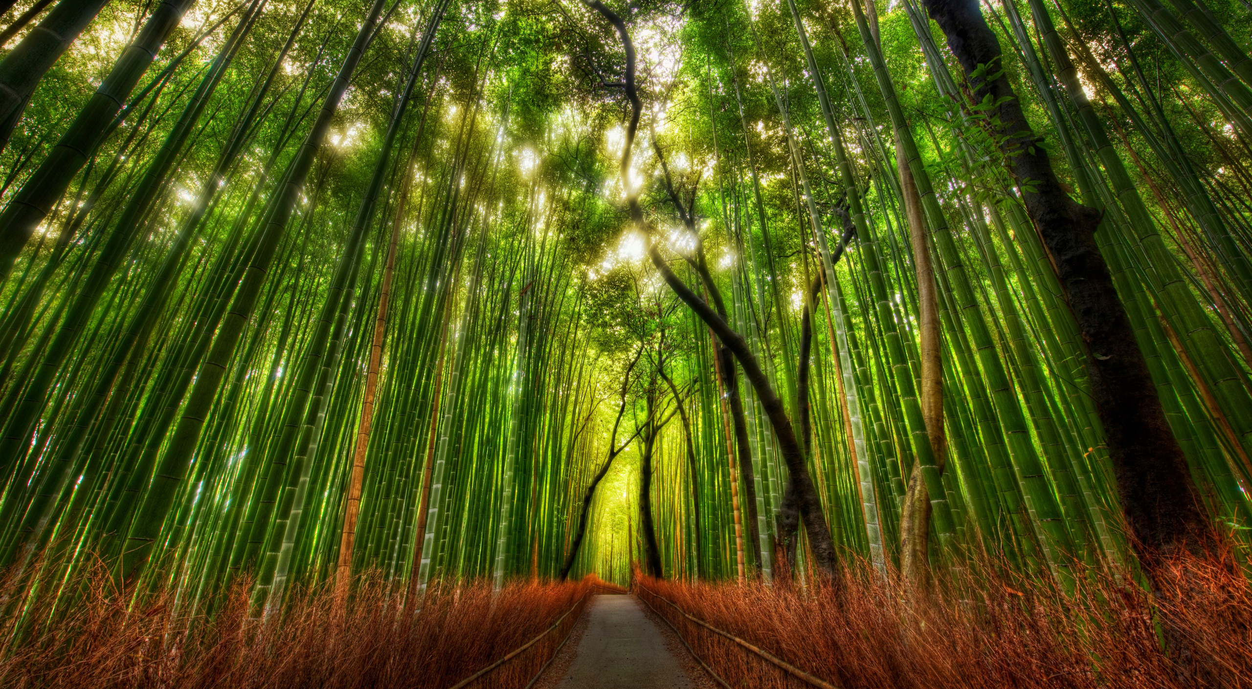 Bamboo forest  54253