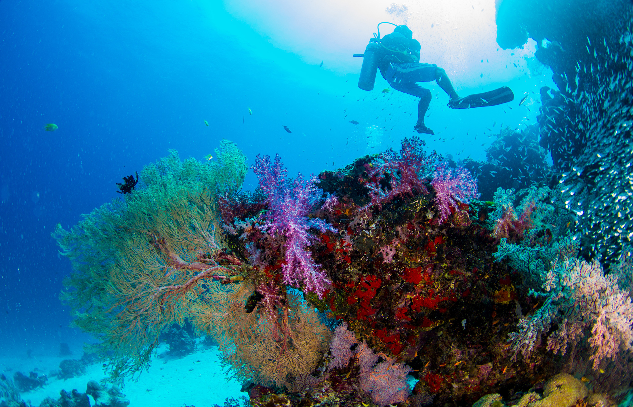 Undersea coral reef with fish  54255